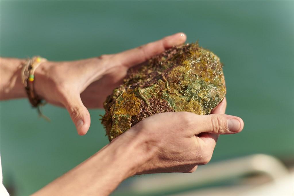 澳洲福林德斯大學考古學家1日發表報告表示,他們首次在澳洲海床發現原住民文物。(圖取自figshare.com;作者S. Wright,CC BY-SA 4.0)