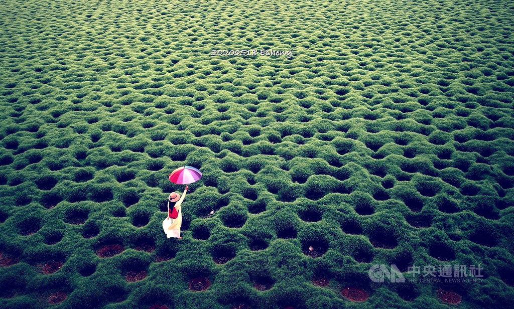 嘉義縣攝影師黃一盛10日表示,日前攝影好友於太保市安仁里發現這處奇特的魚塭,當時利用空拍機拍下女子拿著彩色洋傘的畫面,景色非常夢幻,經網路、媒體曝光後,被網友稱為「洞洞草原」。(黃一盛提供)中央社記者黃國芳傳真 109年7月10日
