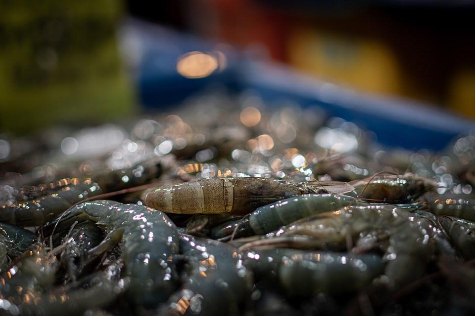 北京新發地市場爆出疫情後,中國海關對進口冷凍食品展開武漢肺炎病毒監測,並於3日在從厄瓜多生產的冷凍白蝦外包裝樣本中,檢出病毒核酸陽性。(示意圖/圖取自Pixabay圖庫)