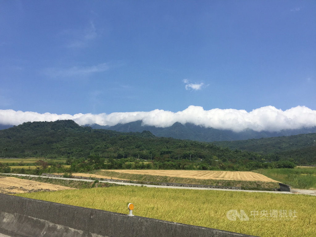 入夏以來天氣炎熱,全台最高溫多次落在花蓮段縱谷,其中位於縱谷的富里鄉今年一期稻作因高溫而歉收。中央社記者李先鳳攝 109年7月14日