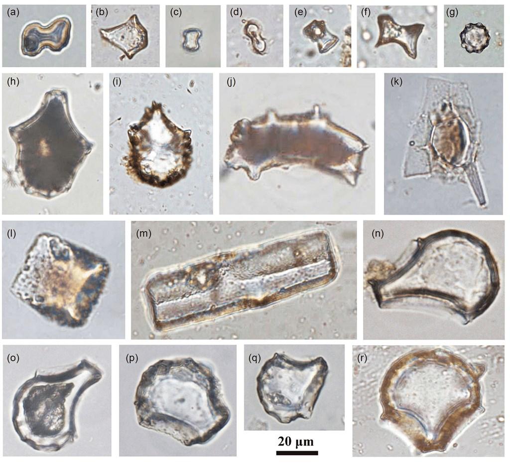 中國科研人員在距今3萬年左右的廣西婭懷洞遺址展開合作研究,發現1.6萬年前的稻屬植矽體。(圖取自中國科學地球科學網頁engine.scichina.com)