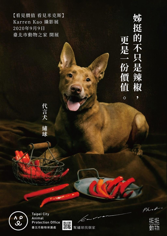 台北市動保處與長期關注動物保護議題的團體合作,9日將在台北市動物之家舉辦以米克斯犬為主軸的雙攝影展,更安排米克斯犬與農產品合影,化身代言犬。(台北市動保處提供)中央社記者劉建邦傳真 109年9月8日