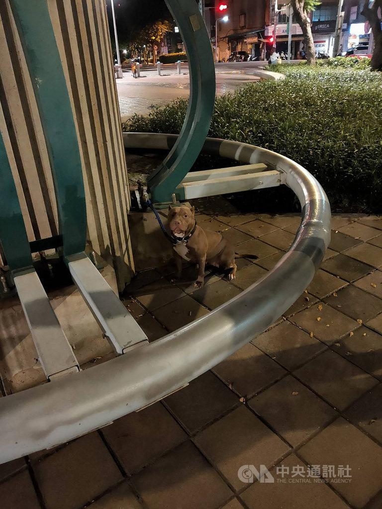 台北市動物保護處15日表示,13日晚間獲報在中山區花博公園發生一起比特犬咬死貴賓犬事件,經調查,比特犬的陳姓飼主到公園遛狗時,未替比特犬戴面罩及繫繩,導致意外發生,動保處將依法開罰。(動保處提供)中央社記者劉建邦傳真 109年9月15日
