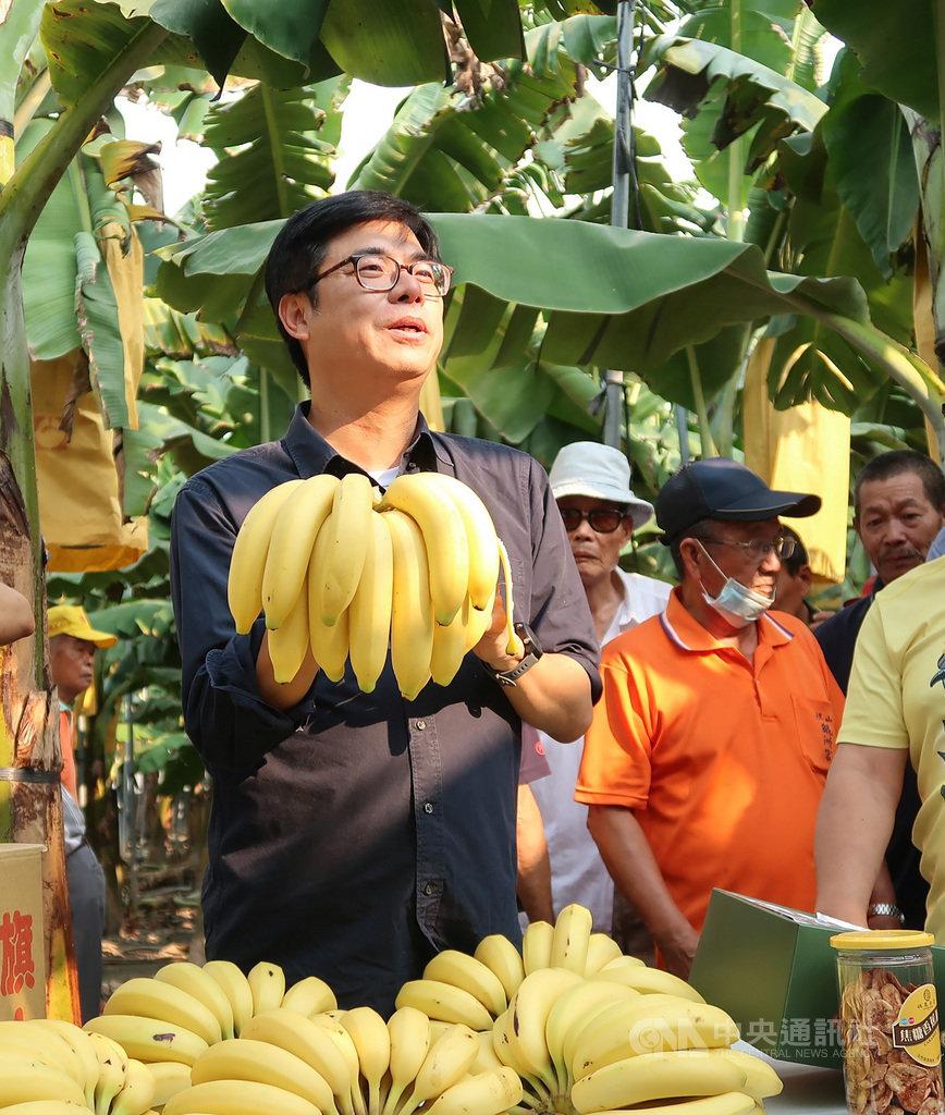 高雄市長陳其邁(前)16日到旗山區一處香蕉園為旗山香蕉行銷,並允諾協助蕉農拓展通路,促請賣場及觀光業者增加採購。中央社記者王淑芬攝 109年9月16日