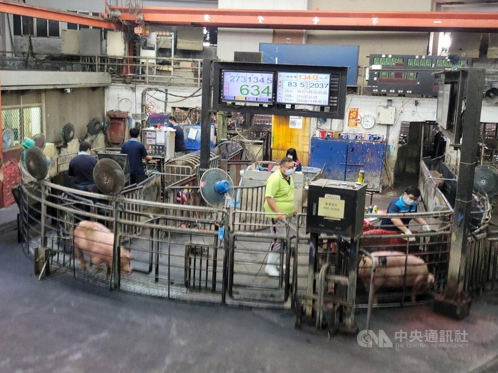 雲林肉品市場近期豬隻拍賣頭數由約2500頭下降至2200頭,減少數百頭,但拍賣價格卻下跌,雲林縣肉品市場總經理黃加安22日說,豬價是市場自由機制,市場已配合農委會要求請豬農每日減少出豬頭數。中央社記者姜宜菁攝 109年9月22日