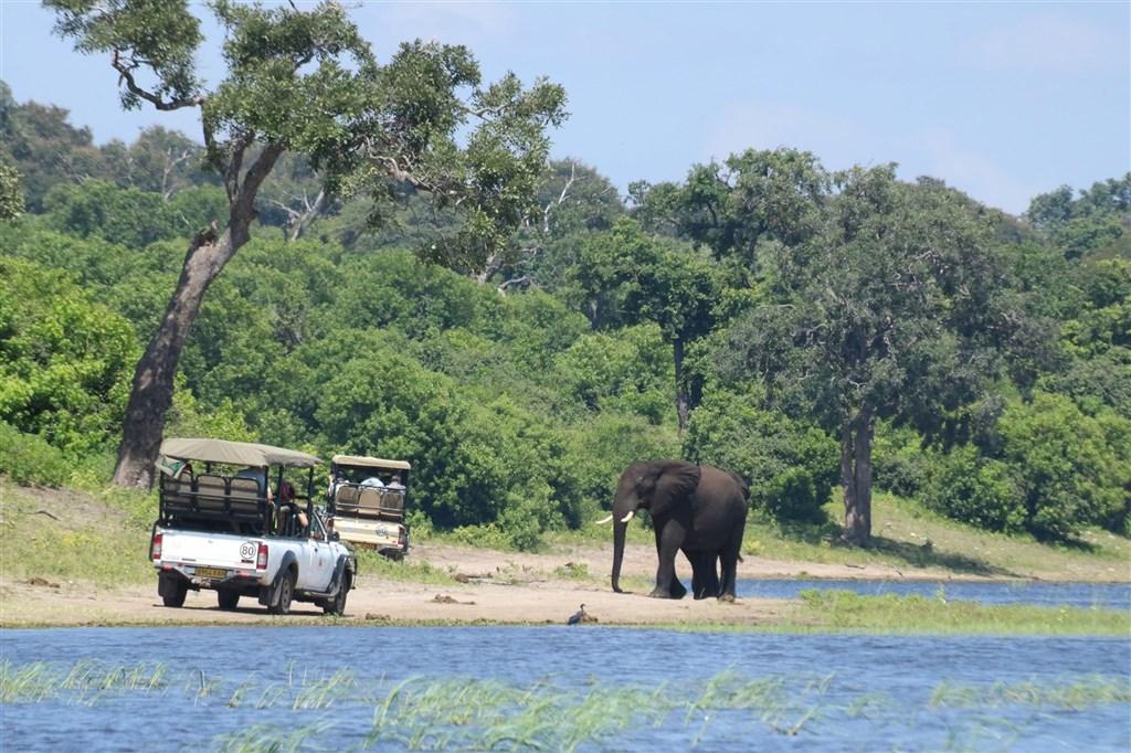 非洲國家波札那官員21日說,波札那今年數百頭大象死亡讓環境保護人士感到困惑和震驚,最後發現是由水中細菌藍綠藻產生的毒素引起。(圖取自facebook.com/BotswanaGovernment)