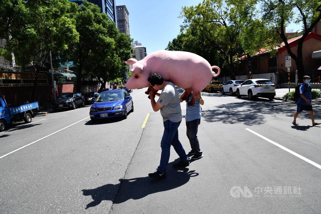 國民黨反對含萊克多巴胺美國豬肉進口發起公投,23日到中選會送出第一階段連署書,黨工將道具豬從中選會抬回立法院。中央社記者王飛華攝 109年9月23日