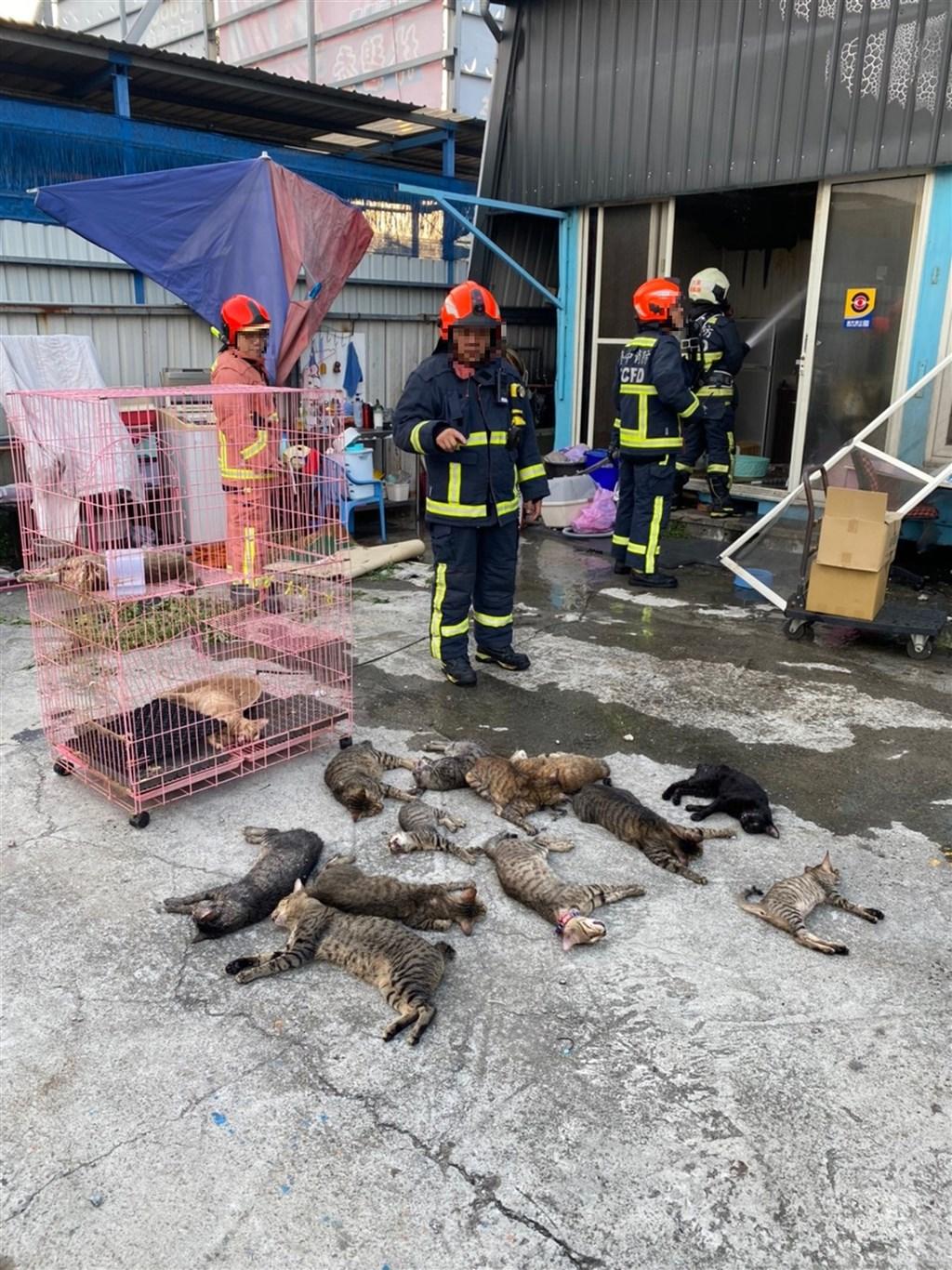 台中市大里區一處汽車美容廠26日發生火警,消防局獲報立即派員前往救援,救出廠內飼養的14隻貓。(台中市消防局提供)中央社記者蘇木春傳真 109年9月26日