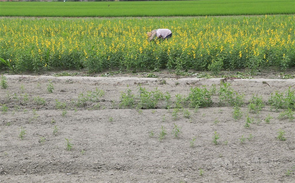 今年水情不佳,桃竹苗灌區1.9萬公頃農田將停灌,經濟部19日在臉書貼文說明為何到10月才突然宣布停灌。(中央社檔案照片)