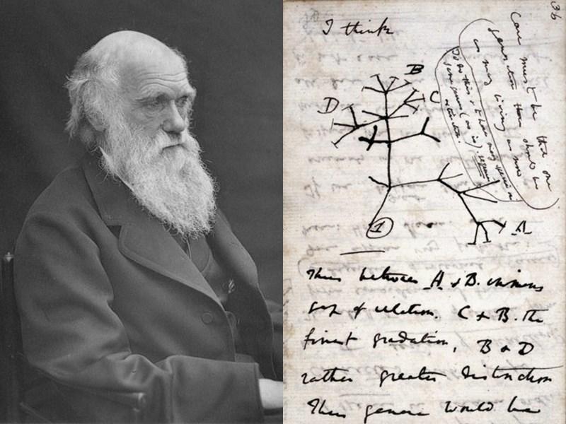 演化論創立者達爾文(左)生前的兩本筆記本在英國劍橋大學圖書館遭竊,內有關於演化論的開創性想法和「生命之樹」(右)的草圖,價值數百萬英鎊。(圖取自維基共享資源,版權屬公眾領域)