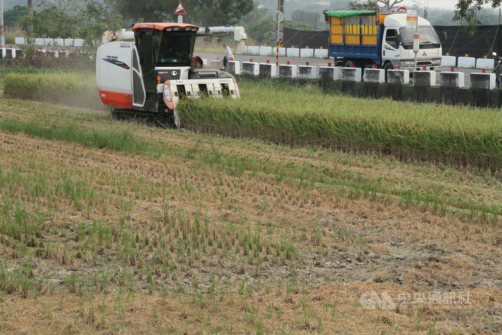 農委會宣布嘉南地區明年第1期稻作停灌,有租地耕作的青農憂心領不到補助。台南市農業局26日表示,農委會休耕補助是針對實際耕作者,對承租農地耕作者較有保障,應不用擔心。圖為台南地區今年第二期稻作收割情形。中央社記者楊思瑞攝  109年11月26日