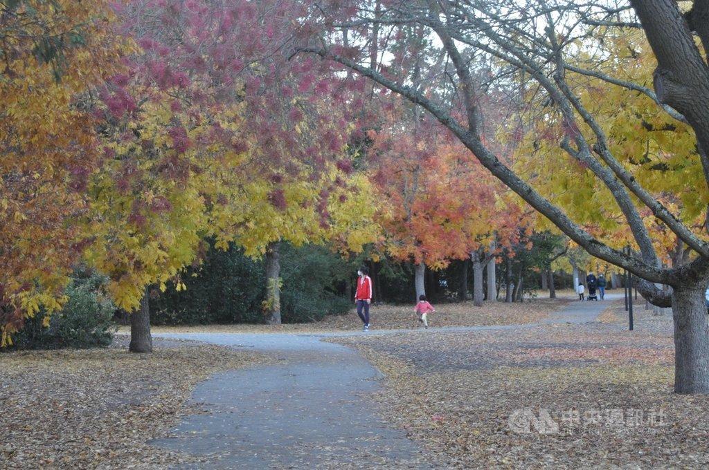 2020年是難忘的疫情之年,感恩節所在的11月是最感恩的季節,改變以往親身團圓的感恩節聚會,有些人選擇到戶外散步野餐,並和遠方親友視訊互動。圖攝於史丹佛大學校園。中央社記者周世惠舊金山攝 109年11月27日
