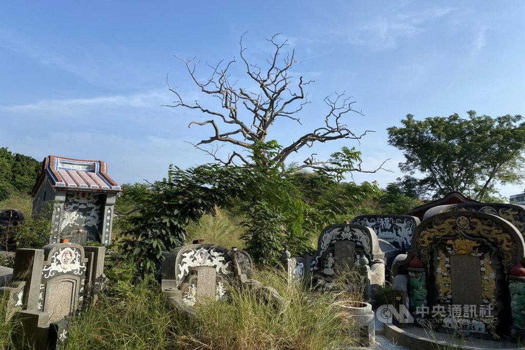 台南市安平區的湯匙山曾是荷蘭人建造用來守衛熱蘭遮城的「烏特勒支堡」所在地,也是台南地區歷史悠久的公墓之一。(台南市文資處提供)中央社記者楊思瑞台南傳真  109年11月29日