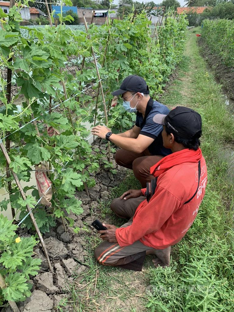 國合會技術團近年在印尼西爪哇卡拉旺推動農業綜合示範區,培訓農民成功種植高附加價值的園藝農作物,提高收入約20%。圖為國合會技師邱建翔(左)向農民解說苦瓜栽培。(駐印尼代表處提供)中央社記者石秀娟雅加達傳真 109年12月1日