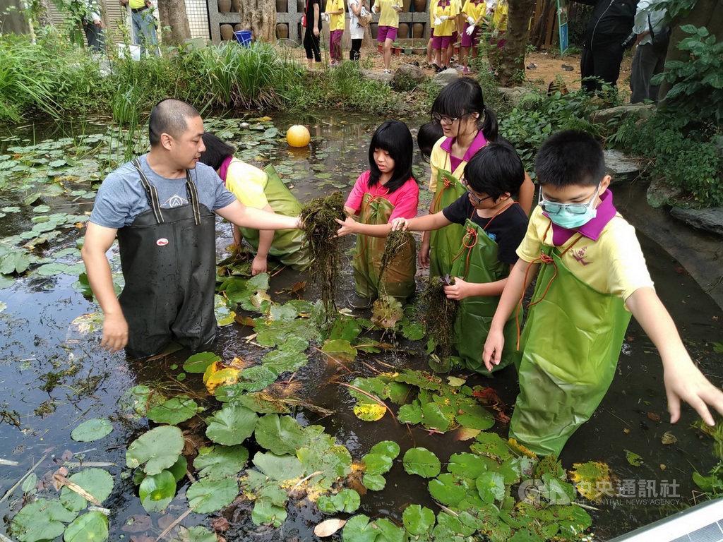 鶯歌國中親師生改造生態池 恢復環境多樣性