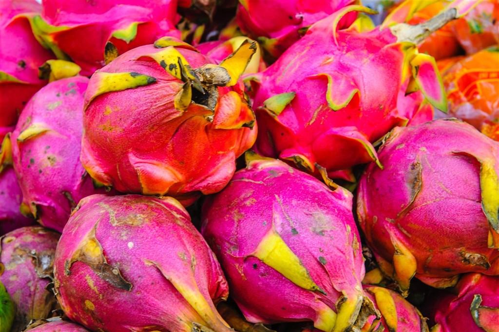 印度人民黨執政的古茶拉底省最近宣布,因火龍果外型像蓮花,改以梵文命名為Kamalam(蓮花)。(圖取自Unsplash圖庫)