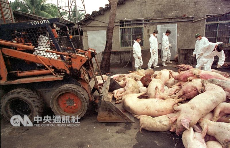 21年前豬隻口蹄疫衝擊養豬戶,全台撲殺超過400萬頭豬隻。(中央社檔案照片)