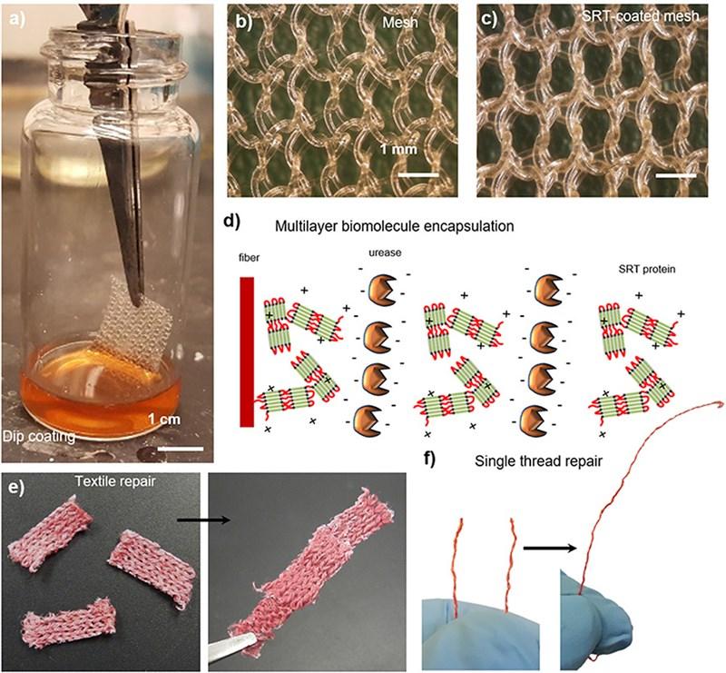 根據研究,魷魚體內發現的蛋白質能用來製造永續的塑膠替代物。(圖取自Frontiers in Chemistry期刊網頁frontiersin.org)