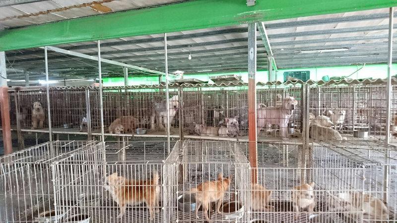 雲林縣動植物防疫所接獲檢舉,在北港鎮查獲一處非法寵物繁殖場,場內有超過200隻來路不明各種犬、貓。(鄭安國提供)中央社記者蔡智明傳真 108年10月18日
