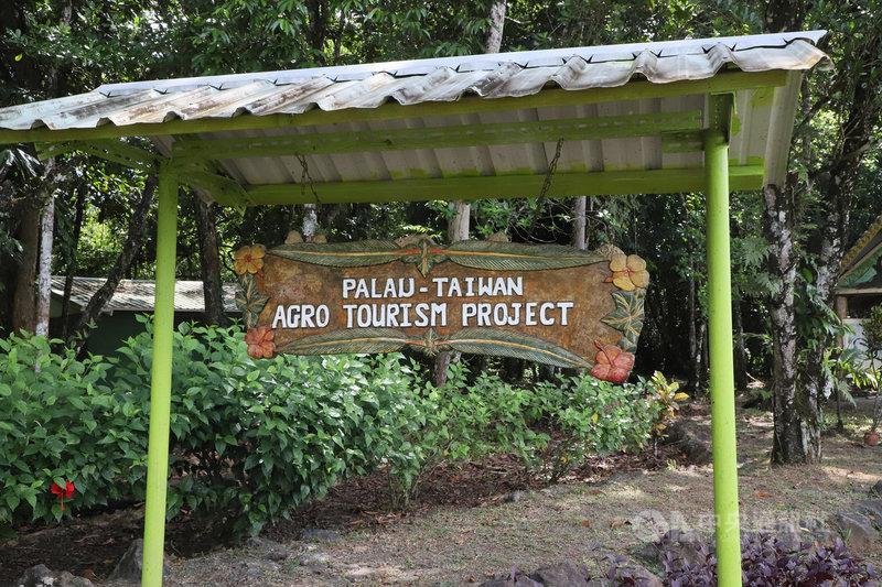 國合會駐帛琉技術團與日本笹川和平基金會合作推動帛琉生態旅遊,技術團示範農場列為景點之一。(國合會提供) 中央社記者侯姿瑩傳真 108年10月26日