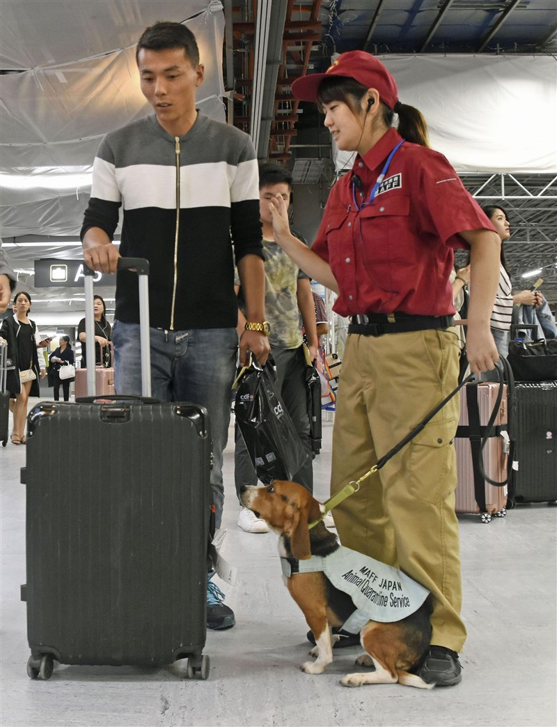 日本機場接連在旅客攜帶豬肉製品中驗出病毒,日本專家表示,希望大家徹底做好防疫工作,避免違法攜帶肉類加工品入境日本。(共同社提供)