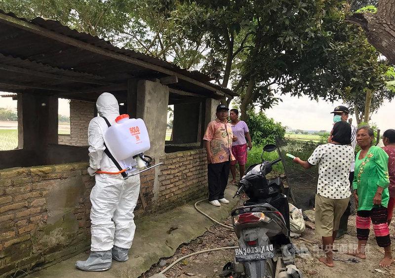 印尼19日宣布非洲豬瘟蔓延至北蘇門答臘省,印尼當局已經採取必要措施,避免疫情擴散。(印尼農業部提供)中央社雅加達傳真 108年12月19日