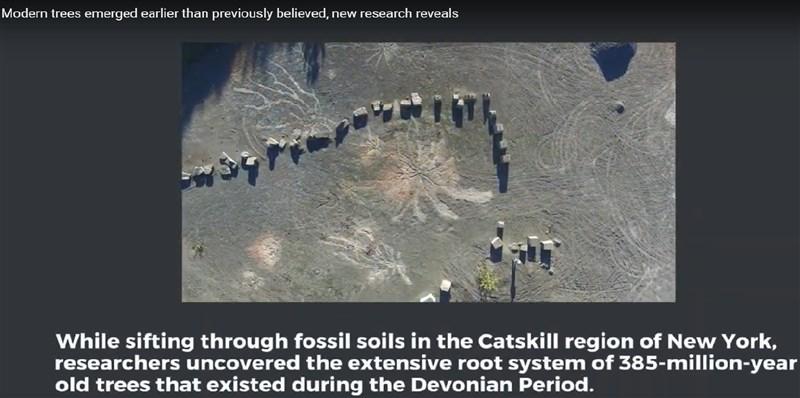 「當代生物學」(Current Biology)期刊研究報告指出,科學家在紐約州發現可能是全球最古老森林,可能蘊藏著森林與氣候變遷之間的關聯。(圖取自Binghamton University YouTube網頁youtube.com)
