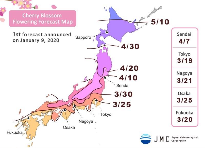 民間氣象公司「日本氣象公司」9日公布2020年首次櫻花開花預測,由於可能受到暖春影響,預估東京將提早在3月19日前後開花。(圖取自日本氣象公司網頁n-kishou.com)