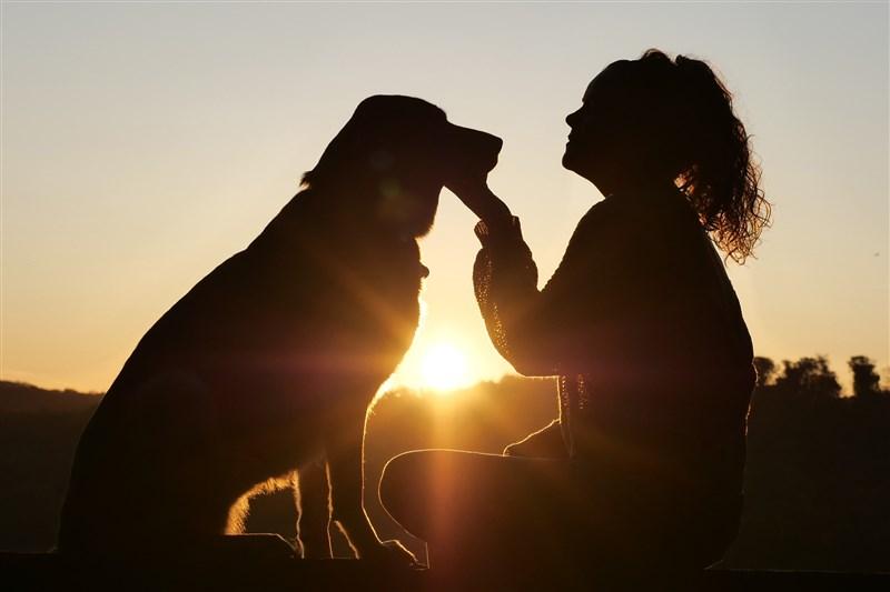 媒體報導香港有確診病患家犬驗出冠狀病毒弱陽性。農委會副主委黃金城28日表示,主人的病毒可能進到狗的口、鼻,但不見得會增殖,過度解讀恐怕造成遺棄潮。(示意圖/圖取自Pixabay圖庫)