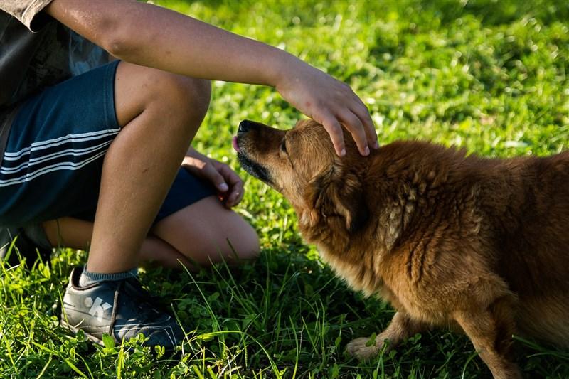 香港一名武漢肺炎確診患者的寵物狗上週對病毒測試呈弱陽性反應,經反覆檢測,漁農署4日晚間確定這隻小狗已低程度感染病毒。(示意圖/圖取自Pixabay圖庫)