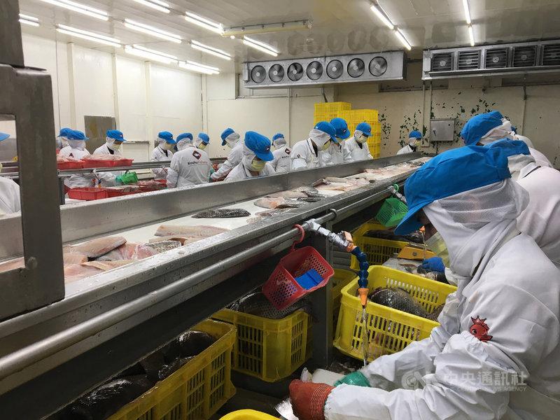 口湖魚類生產合作社養殖面積達1000公頃,年產量約1萬公噸,加工日產量達30公噸,養殖面積、產量均為台灣之冠。總經理王益豐說明,鯛魚產品取得HACCP相關認證,成為全球第一個上太空的魚類食品。中央社記者蔡芃敏攝 109年3月3日