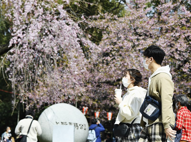 武漢肺炎疫情全球延燒,旅台日人栖來光表示,台灣防疫政策極為迅速,日本應該多加學習。圖為日本東京上野公園遊客戴口罩賞櫻。(共同社提供)