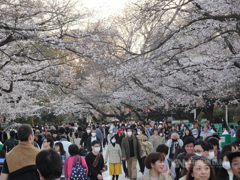 日本東京上野恩賜公園櫻花怒放,受到武漢肺炎疫情影響,今年賞櫻客比去年少,但最近3天連假,湧入的遊客超乎預期。圖為21日的景象。中央社記者楊明珠東京攝 109年3月22日