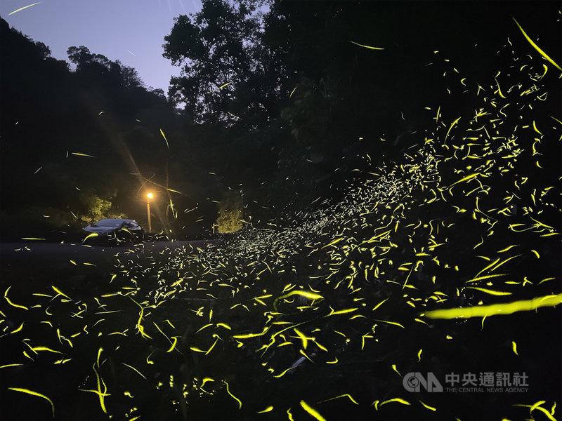 22日是世界地球日,台灣知名生態攝影師施信鋒分享用iPhone拍攝螢火蟲的訣竅。圖為使用iPhone 11 Pro Max搭配攝影專用App ProCam 7來拍攝螢火蟲的照片。(蘋果公司提供)中央社記者吳家豪傳真 109年4月22日