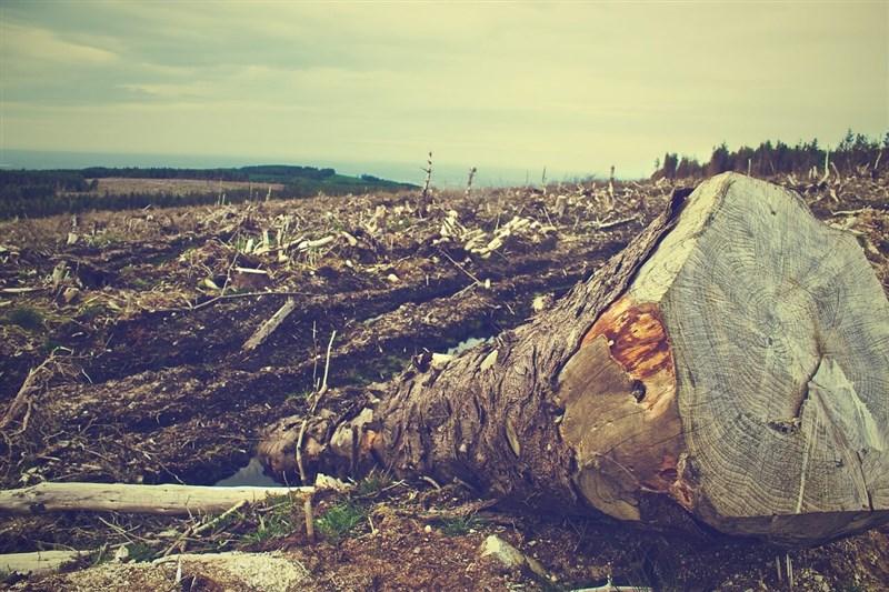 最新數據顯示,亞馬遜雨林去年濫伐面積增加17%。(示意圖/圖取自Pixabay圖庫)
