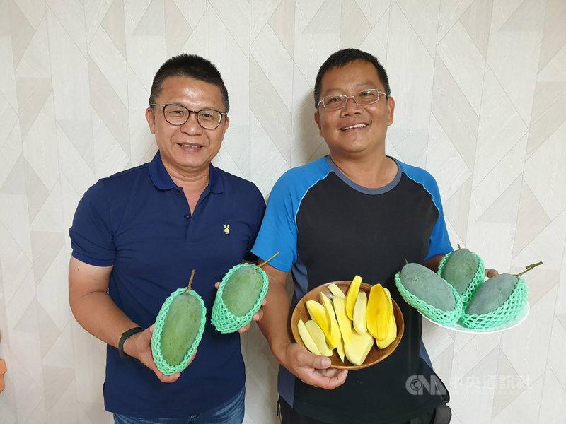 農糧署南區分署長姚志旺(左)15日宣布,屏東果農潘連進(右)從泰國引進的當地綠皮黃肉土芒果,經11年馴化成功,取名為「翡翠芒果」,今年上市,成為全台唯一。(農糧署提供)中央社記者郭芷瑄傳真 109年6月15日