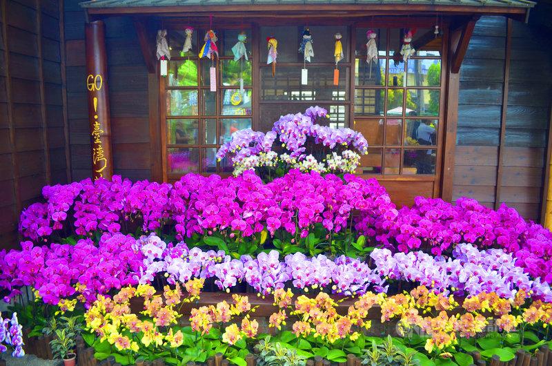 雲林故事館周遭圍繞著蝴蝶蘭、文心蘭、洋桔梗、天堂鳥等花卉,為促銷國產花卉,即日起推出為期一個月的花卉展,以美麗的花卉藝術造景,吸引鄉親來打卡、買花。中央社記者蔡智明攝 109年7月6日