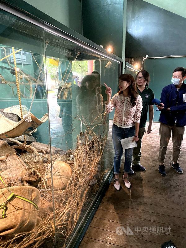 台北市6月間發生咖啡廳業者涉嫌虐待浣熊,經民進黨市議員許淑華(左)協助,4隻浣熊被安置在台北市立動物園,13日開放亮相,許淑華到動物園了解被安置浣熊狀況。(許淑華辦公室提供)中央社記者劉建邦傳真 109年10月13日