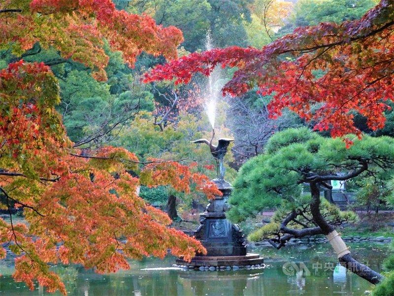 東京日比谷公園內有一座雲形池,池中的鶴噴水銅雕是日本現存第3古老的噴水座,歷史逾百年。每到秋天池畔銀杏、紅楓倒映池水,景色絕美。中央社記者楊明珠東京攝 109年11月17日