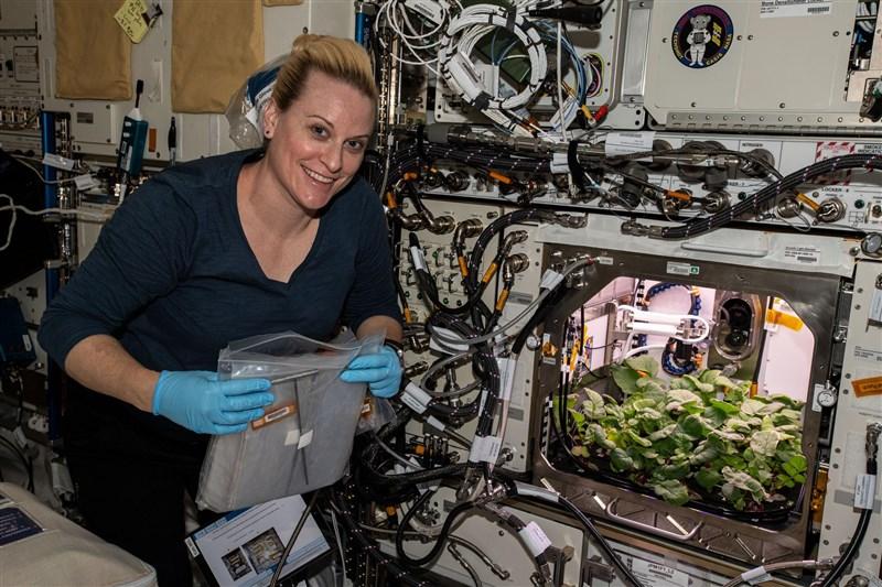 美國NASA太空人魯賓斯(圖)在國際太空站的「先進植物培養系統」採收20株蘿蔔。(圖取自twitter.com/ISS_Research)
