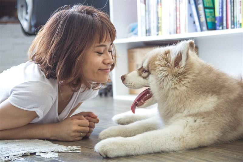 許多人可能認為狗可以聽懂人類說的每一個字,但一項新研究顯示,狗很可能無法聽懂每個字彙。(圖取自Pixabay圖庫)