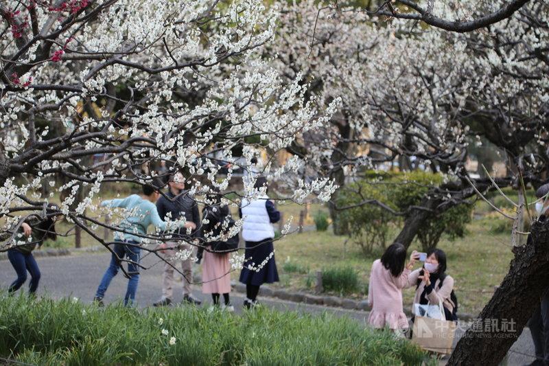 日本東京鐵塔旁的芝公園有一片被稱為「銀世界」的梅園,近日春暖花開,吸引許多遊客前來。中央社記者楊明珠東京攝 110年2月22日