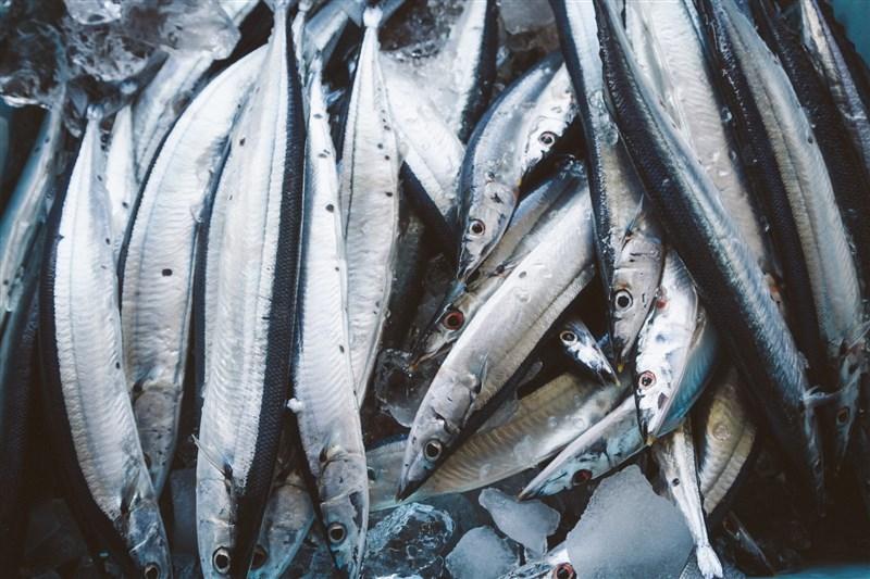 日本政府13日決定2年後將福島第一核電廠廢水稀釋後排入海中。農委會根據洋流路徑判斷秋刀魚場首當其衝,若有疑慮,日本先受害。(圖取自Pakutaso圖庫)