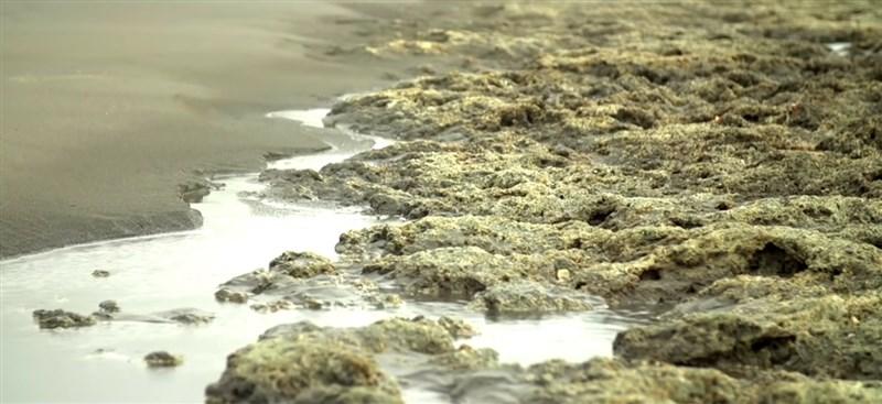 桃園大潭觀塘工業園區中油第三天然氣接收站案,2018年環評通過至今爭議不斷。環保團體發起「搶救藻礁」公投連署破50萬份,相關話題再次引起關注。(圖取自中油影城YouTube頻道網頁youtube.com)