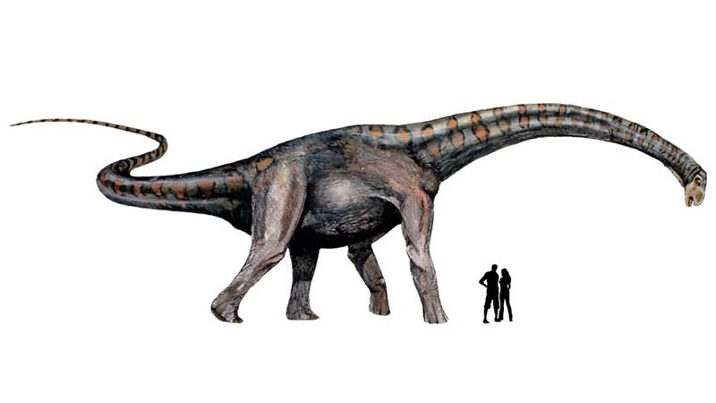 科學家指出,2014年在阿根廷出土的蜥腳類恐龍化石,可能是歷次泰坦巨龍化石裡最古老的一隻。圖為蜥腳類恐龍想像畫。(圖取自阿根廷國家科學及科技研究委員會網頁www.conicet.gov.ar)