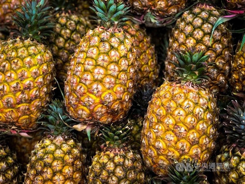 中國3月起暫停輸入台灣鳳梨,若銷中的一般果園不想減產,須升級為外銷供果園才能轉銷他國,以免明年轉內銷價跌。(中央社檔案照片)