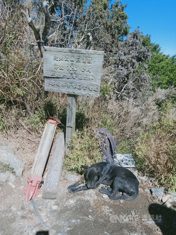 北大武山有隻小黑狗常在山間出入,或陪伴山友攻頂,北大武山檜谷山莊莊主吳德發8日在臉書分享登頂狗的故事,並籲山友別再餵食,因為牠們不屬於山上動物。(吳德發提供)中央社記者郭芷瑄傳真 110年3月8日