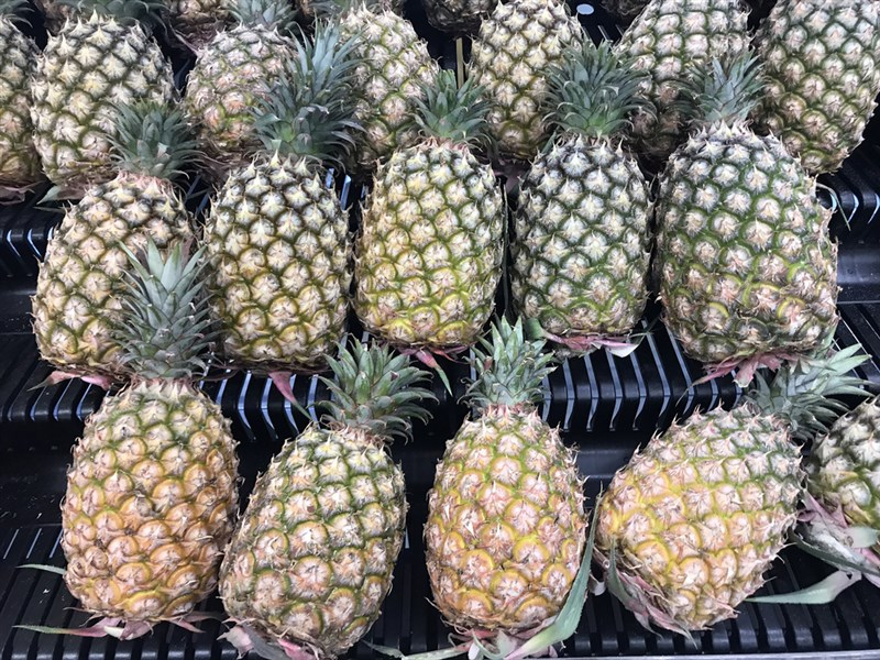 農委會28日指出,首批由澳洲消費者預購2公噸台灣鳳梨檢疫合格順利通關,確立標準通關與商業模式。(中央社檔案照片)
