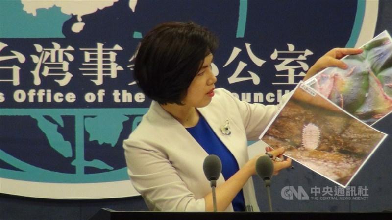 中國大陸國台辦發言人朱鳳蓮(圖)31日在例行記者會拿出通報函與放大的蟲體照片,表示去年向台灣通報鳳梨不合格情況確定是28件。中央社記者繆宗翰北京攝 110年3月31日