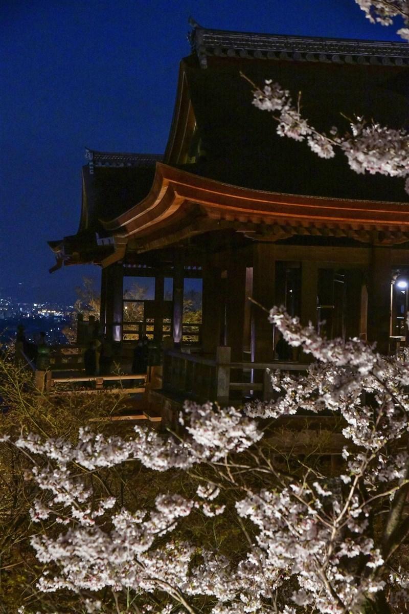 京都素負盛名的粉色櫻花已於3月26日「滿開」,成為自1200年前有紀錄以來,櫻花最早盛放的一天。圖為3月26日晚間京都清水寺的櫻花。(共同社)